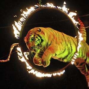 Цирки Большого Луга