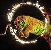 Цирки в Большом Луге