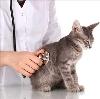 Ветеринарные клиники в Большом Луге